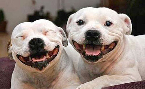 Lucky Break hosts month-long fundraiser for local Lucky Dog